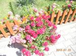 Letnie kolory