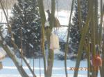 Dokarmiamy ptaki 2010'